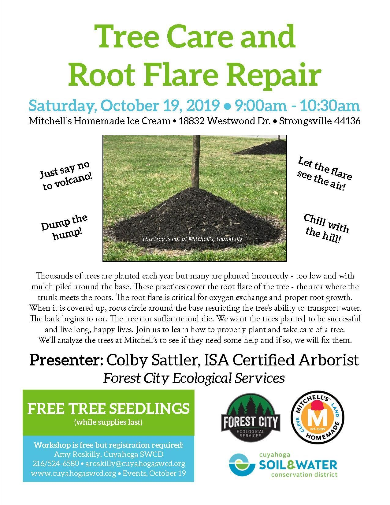 Tree Care and Root Flare Repair